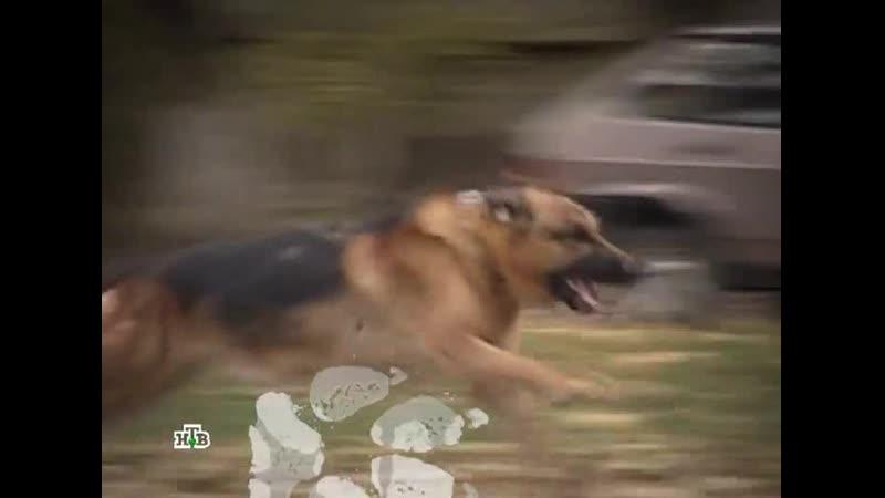 Возвращение Мухтара 2 8 сезон 51 серия