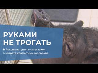 В России вступил в силу закон о запрете контактных зоопарков