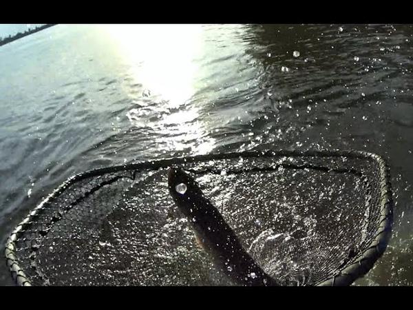 АНТОХА...ЭТОТ КРОКОДИЛ НЕ ВЛЕЗЕТ В ПОДСАКТрофейная рыбалка 2019, крупная щука, монстр, спиннинг.