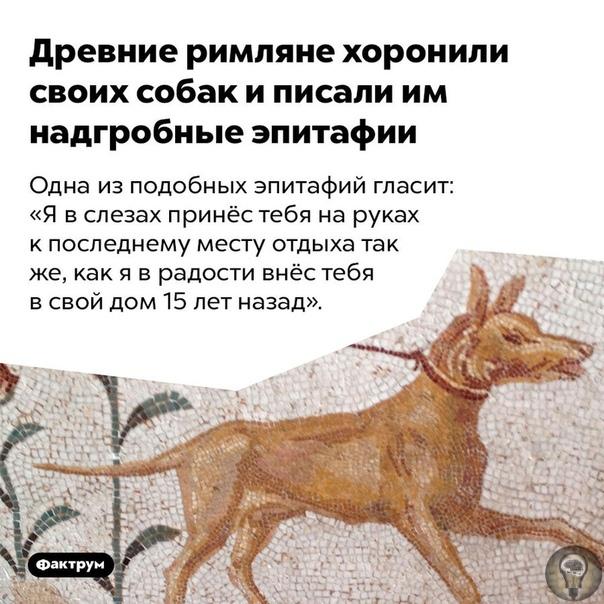 Интересные факты о животных и природе.