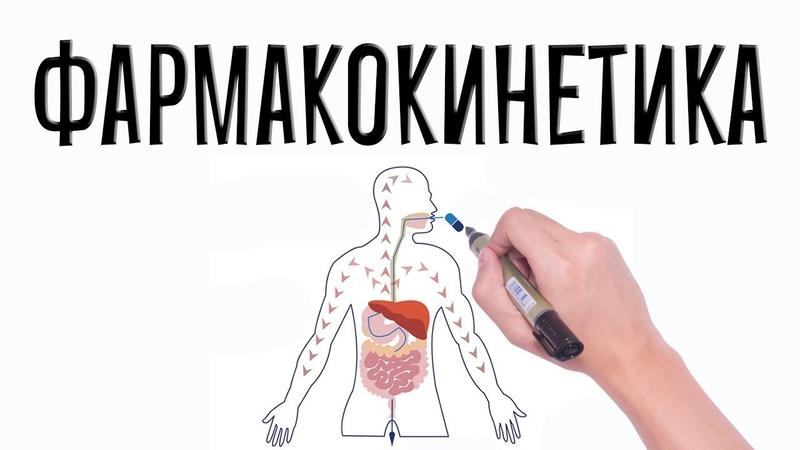 Фармакология. Фармакокинетика (простым языком).