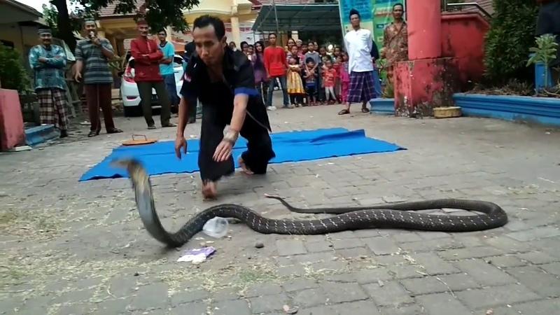 Nusantara reptile edisi ramadhan