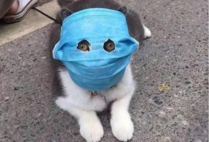 Болеют ли кошки и собаки коронавирусом? Разбираемся вместе с экспертами, изображение №1