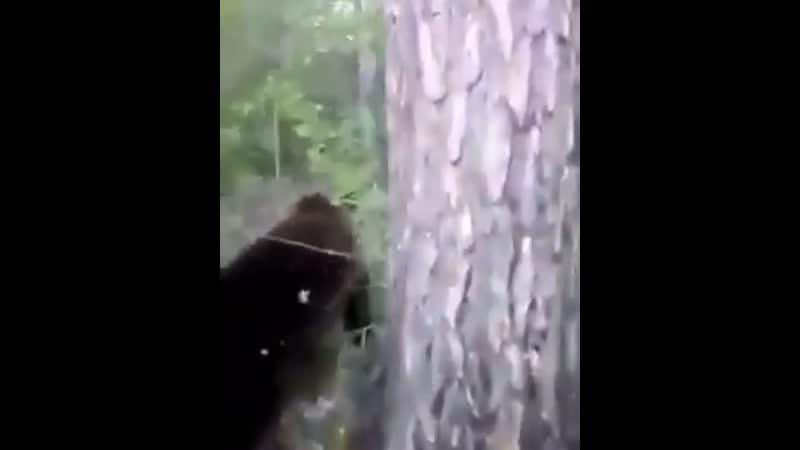 Пнул медведя Группа Выжить Любой Ценой
