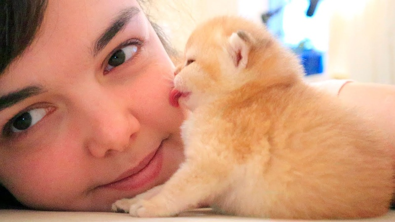 Tiny kitten kisses me 🥰 Relax ASMR Too CUTE
