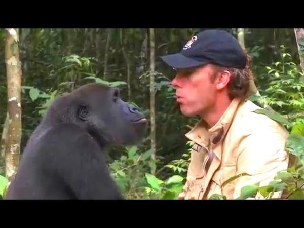 Ему советовали не подходить к горилле которую он вырастил но 5 лет спустя они встретились