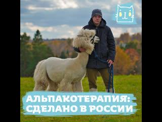 «альпакотерапия»: сделано в россии