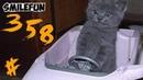КОШКИ 2020 Смешные Кошки и Коты Приколы С Кошками 2020 Funny Cats