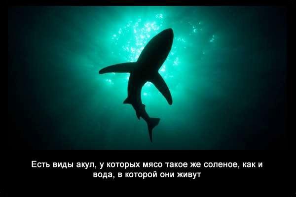 Valteya - Интересные факты о акулах / Хищники морей.(Видео. Фото) - Страница 2 0Ew74JoN_Ec