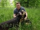 Приют для животных Зверополис Рязань видео снимали Телков Сергей и Бурачкова Ирина