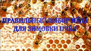 📒 Правильный выбор мёда для зимовки пчёл 📒