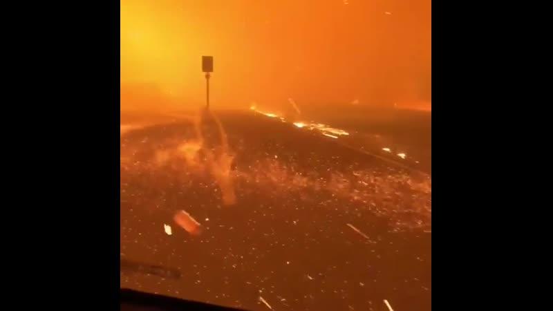 Внутри леса Карра, который теперь сожжен более чем 100 000 акров в Калифорнии