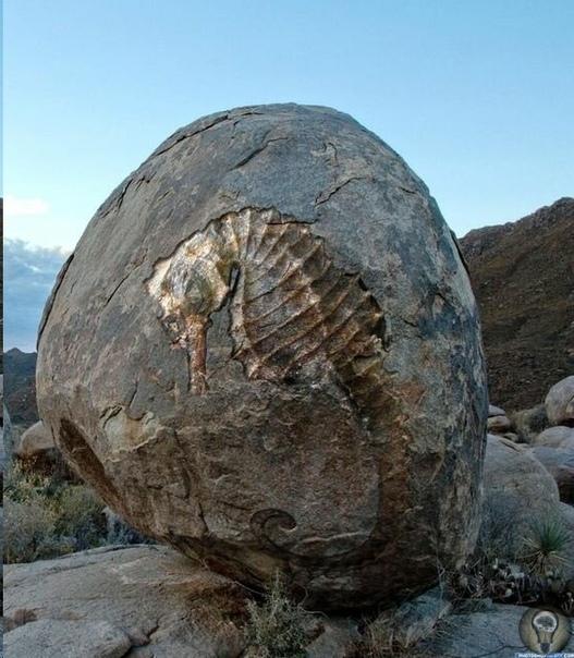 ТЕ, ЧТО СОТНИ МИЛЛИОНОВ ЛЕТ НАЗАД ТАК И НЕ ВЫШЛИ ИЗ ВОДЫ. Завораживающая красота окаменелостей, показывающая нам формы тех существ, которые давным-давно бороздили моря и океаны нашей планеты,