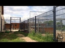 Die Flucht aus Alcatraz (7 Monate alter Wolfshund KENAI will ins Haus)