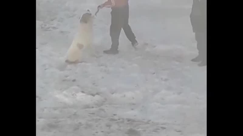 Жителя Челябинска избивающего своего пса засняли на видео