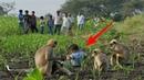 Bocah 2 Tahun Hidup Dengan Gerombolan Monyet!! Faktanya Mencengangkan