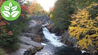 Mountain waterfall in the forest. The sounds of the forest and the river (white noise) for sleep