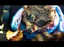 Пустынные приключения - Официальный русский трейлер 2021