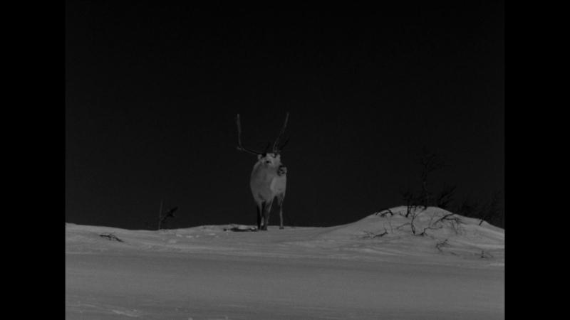 Valkoinen Peura The White Reindeer Erik Blomberg 1952