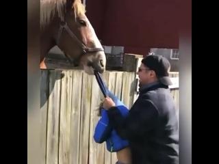 Ненависть коня к ребёнку😁