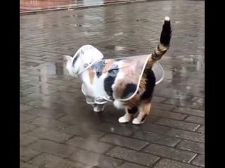 Ничего необычного, просто котик в плащике гуляет под дождиком