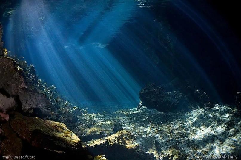 Морские обитатели, которые пугают, изображение №1