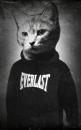 Личный фотоальбом Elizaveta Dragova