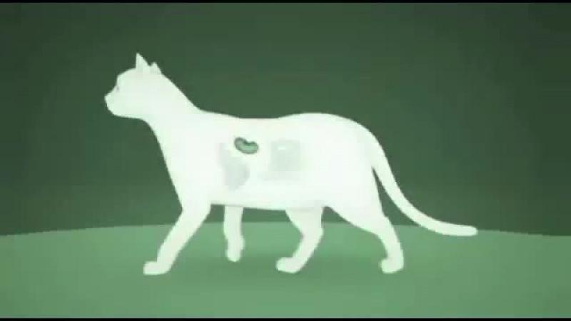 viyo cat— пребиотический напиток.