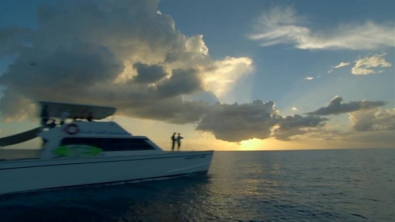 Морские гиганты Ocean Giants 3 серия Голоса океана 2011