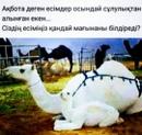 Персональный фотоальбом Айдара Арыстанбекова