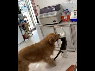 Пес пасёт кота - никакой личной жизни