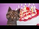V-s.mobiСкачать бесплатно видео открытку с рождением. С ДНЕМ РОЖДЕНИЯ! Видео открытки.