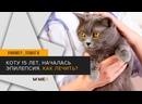 Mimer Ответ ветеринара Коту 15 лет, началась эпилепсия. Как лечить