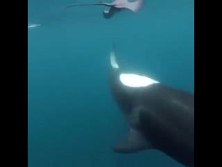Задиры и забияки есть не только среди людей, но и в царстве животных, и это видео — яркое тому доказательство!