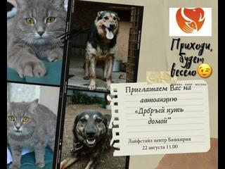 Видео от Добрые руки - помощь бездомным животным г. Уфа
