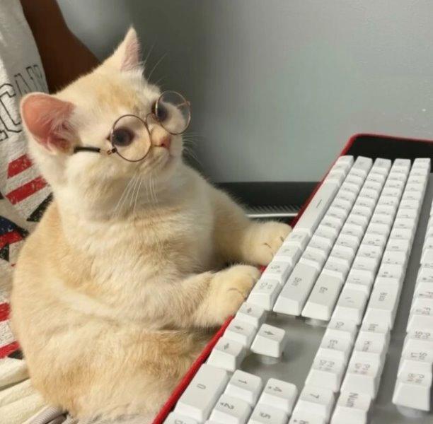Коты в повседневной жизни)