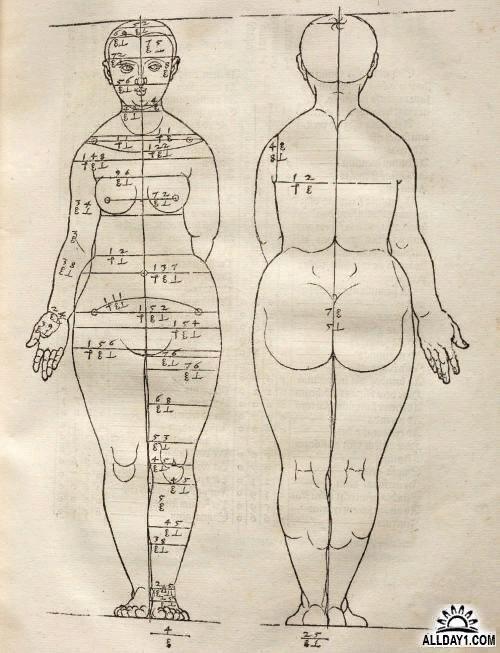 Идеальные пропорции женского тела. Схема,   Типичная Елабуга