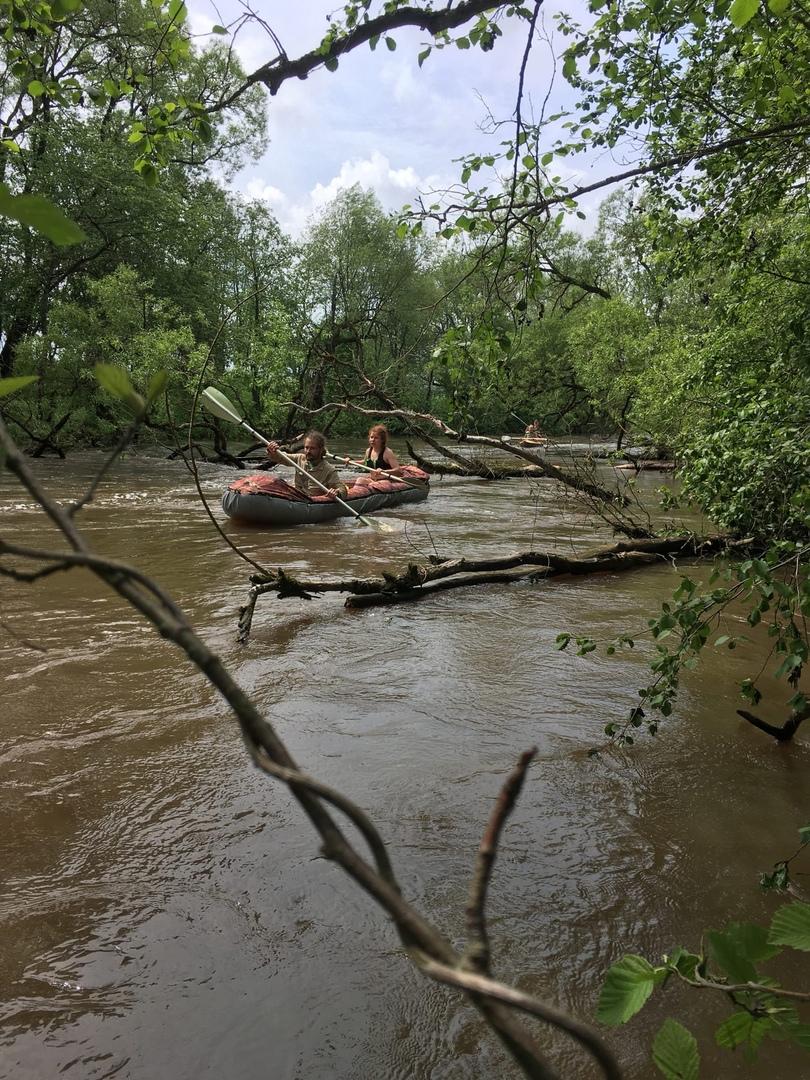 участок реки с ветками