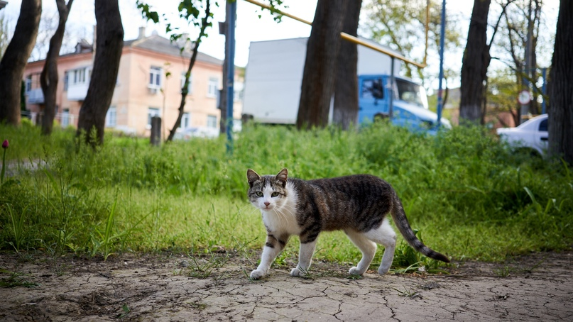Коты Бориса Панкина Maf-chIbdVU