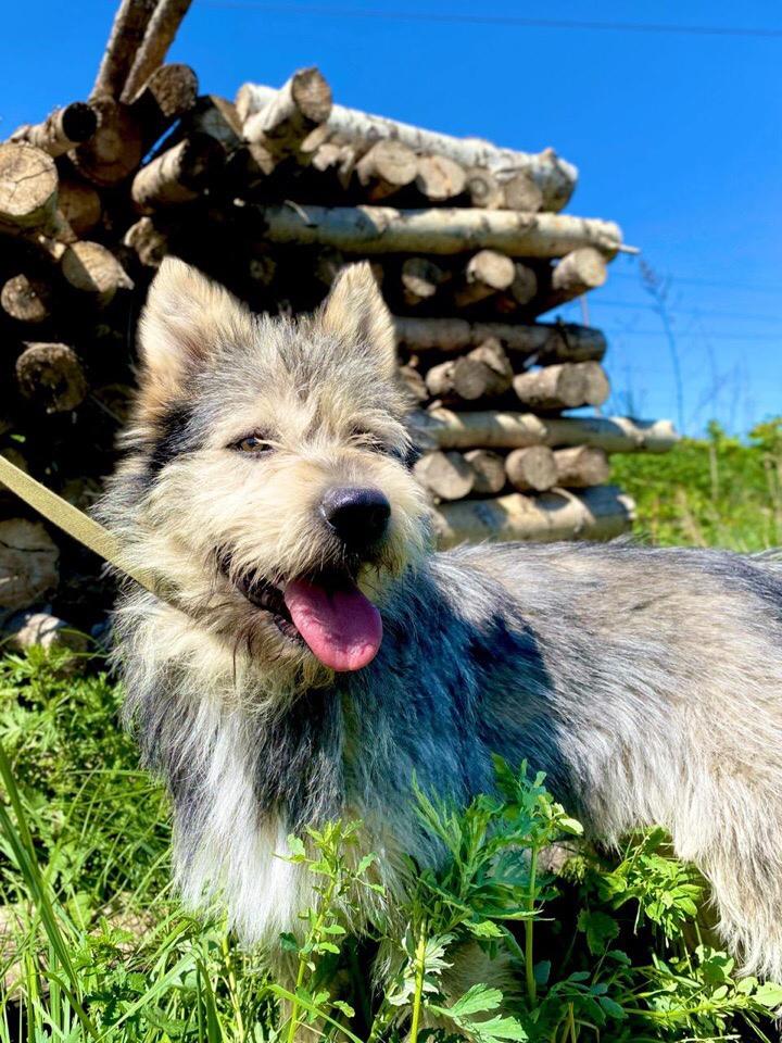 Мега ласковый, активный и супер добрый пёс