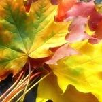 Парафинирование осенних листьев и поделки из них