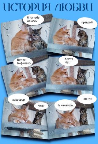 мой кот и кошка)