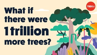 What if there were 1 trillion more trees? - Jean-François Bastin