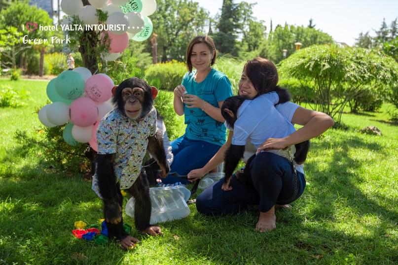 В зоопарке отеля Yalta Intourist отпраздновали день рождения шимпанзенка Оскара!, изображение №3