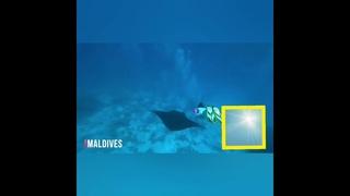 Поужинать суши - 950р, купить туфли - 17000р, Поплавать со скатами Манта на Мальдивах. Бесценно.😍😍❤️❤️❤️
