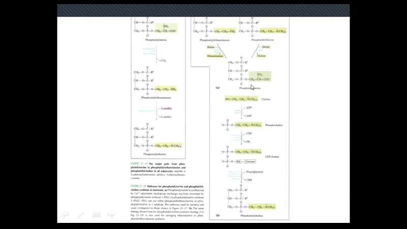 Биохимия - Биосинтез липидов