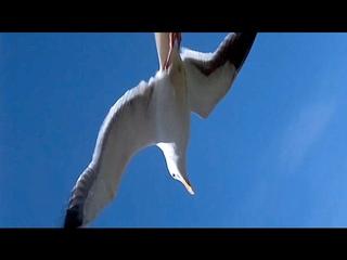 Jonathan Livingston Seagull/Neil Diamond 1)Be (En/Fr Lyrics)