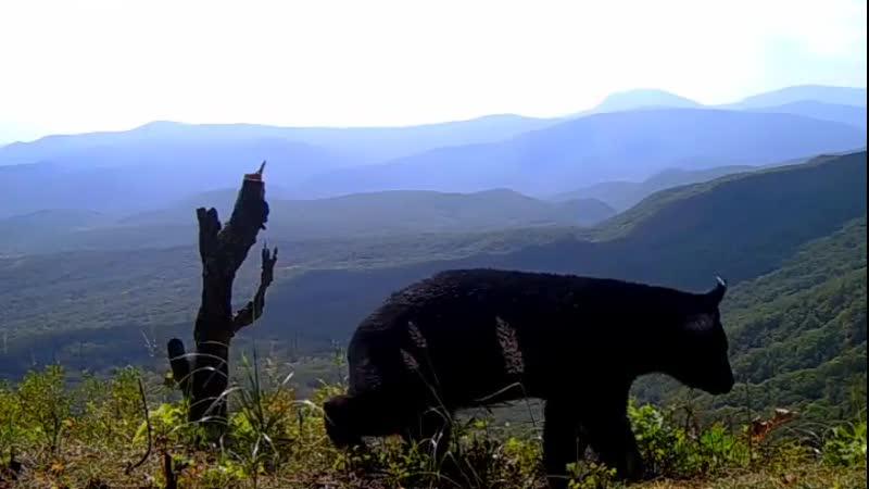 Забравшись на высокую гору гималайский медведь альпинист смог по настоящему оценить великолепие окружающего мира