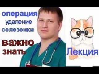 Спленэктомия