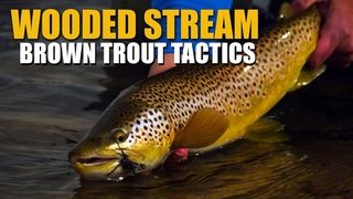 Brown Trout Stream Tactics - Spring Fly Fishing Dry Flies, Streamers & Nymphs in a Wooded Stream
